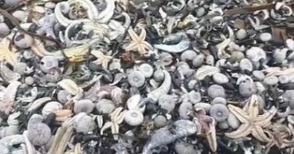 Экологи обнаружили на Камчатке новые трупы морских животных