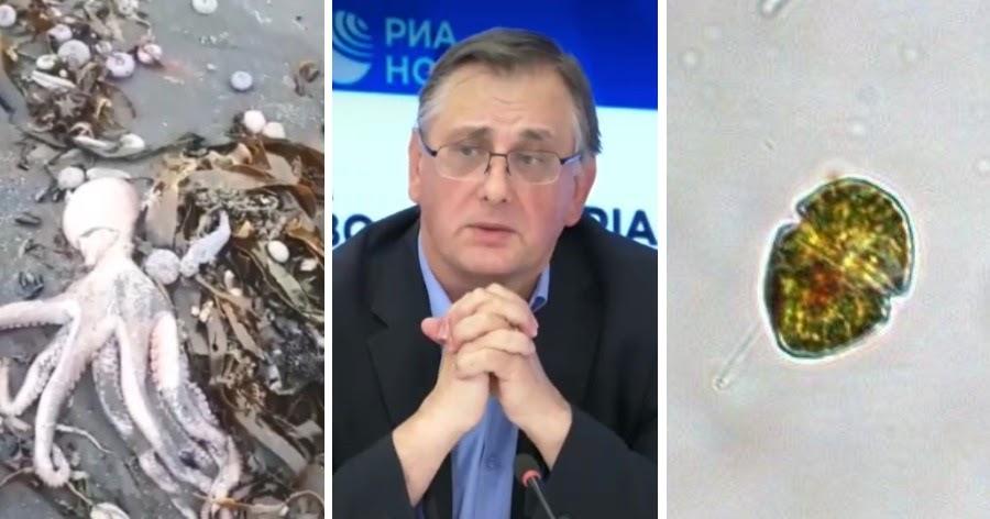 Вице-президент РАН: животных на Камчатке отравили микроводоросли