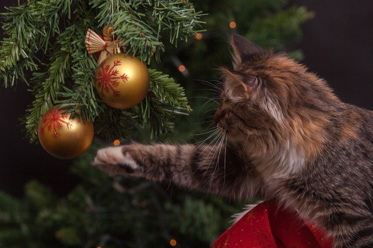 Россияне назвали идеальную продолжительность новогодних каникул