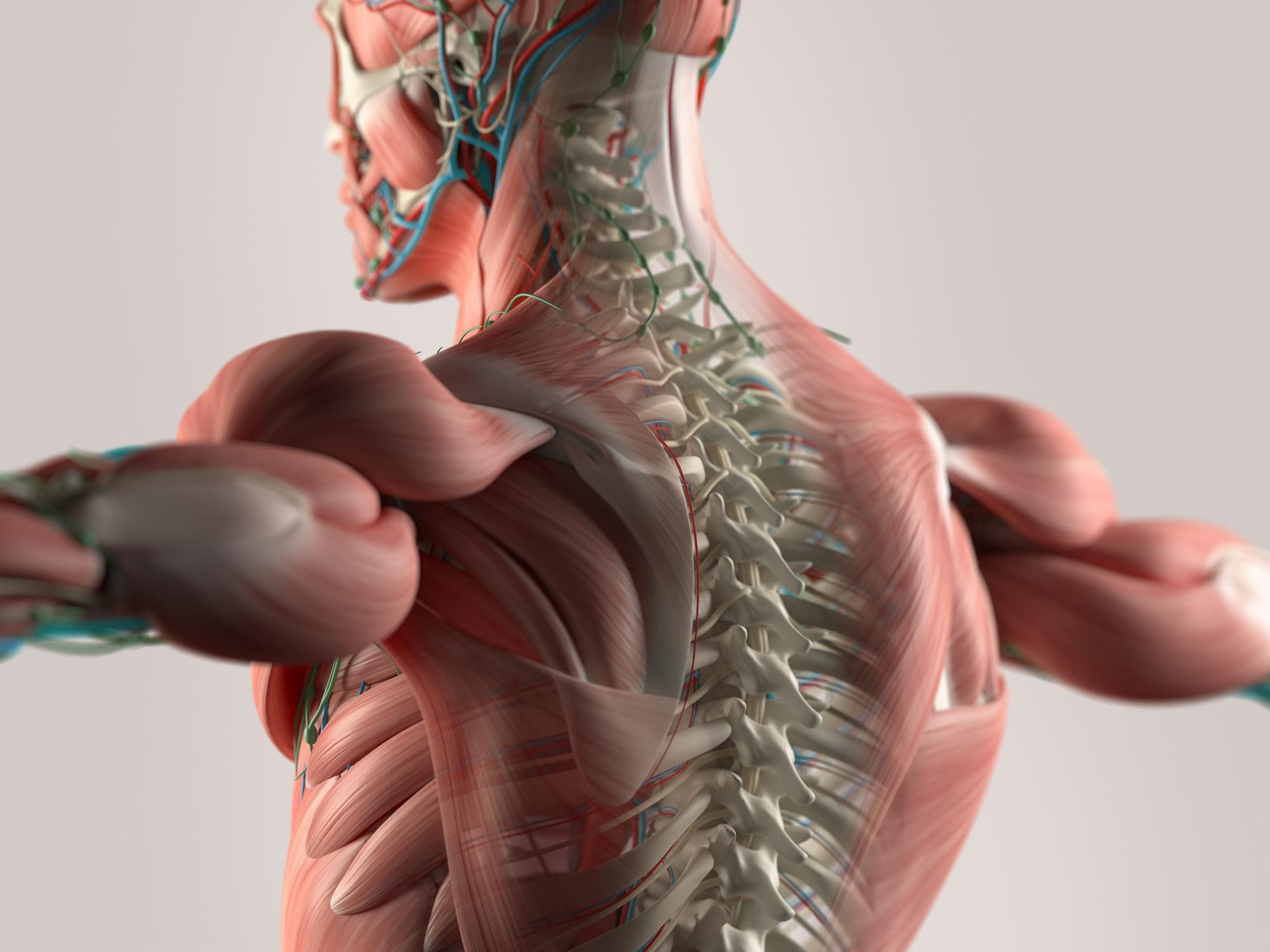 Школьники на Урале будут изучать анатомию с помощью компьютера с 3D-моделями органов