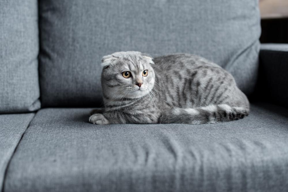 Жительница Кирова продает свою кошку за 1,5 млн рублей
