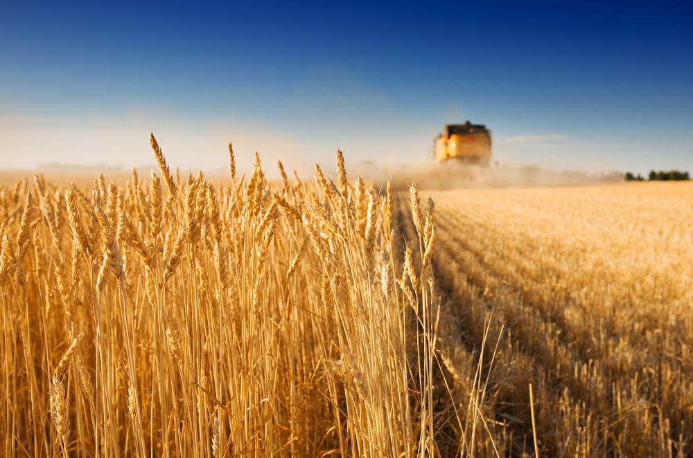В двух регионах РФ может погибнуть урожай