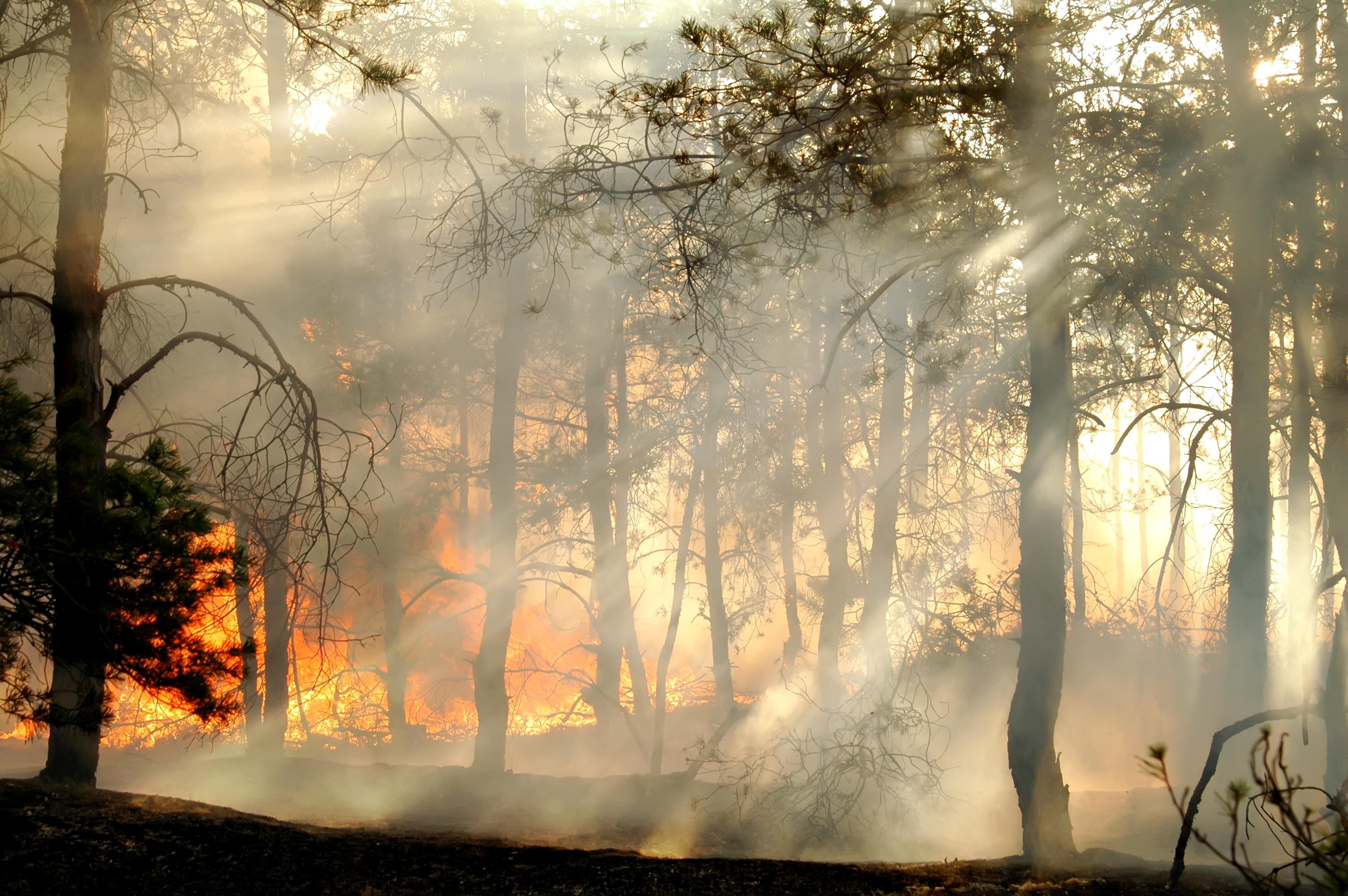 В Бразилии приостанавливают тушение лесных пожаров