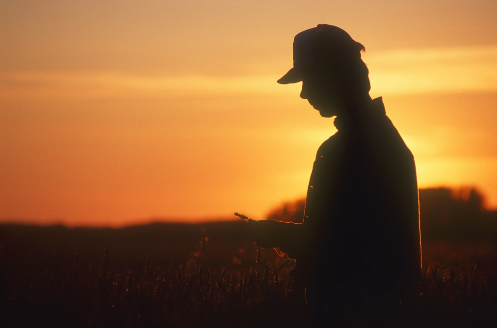 Американские фермеры начали голодать из-за кризиса, спровоцированного пандемией