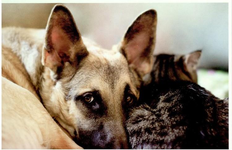 Суд оправдал жителя Подольска, повесившего собаку и изуродовавшего ее труп