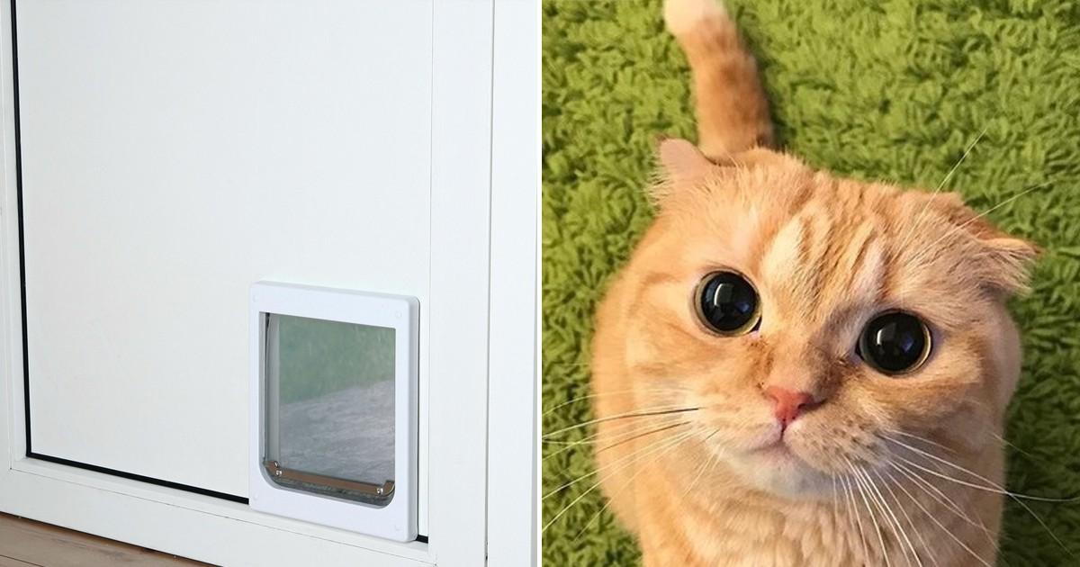 Фото Мужчина изобрел систему распознавания кота, которая пускает его в дом