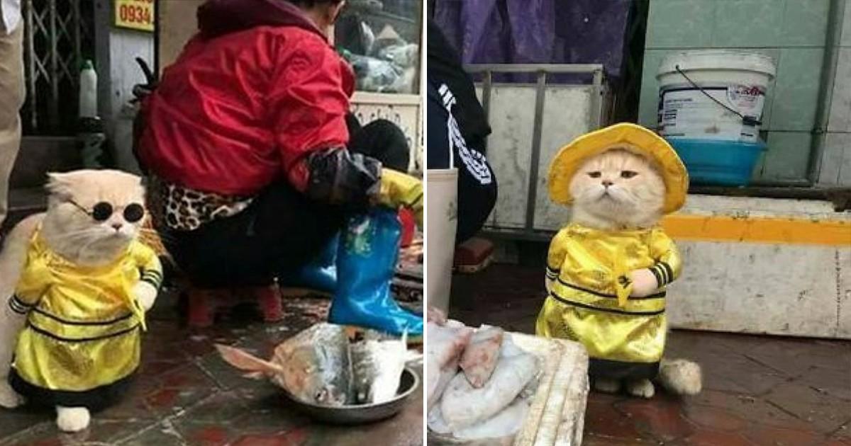 Фото Вьетнамский кот стал самым очаровательным продавцом рыбы