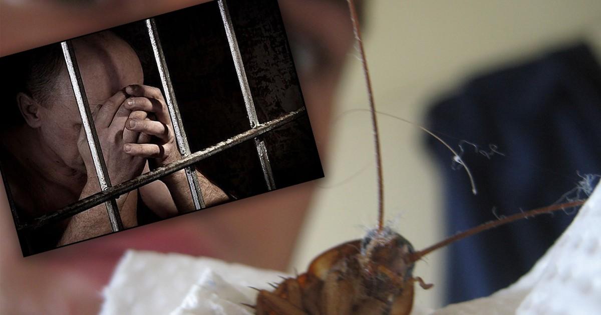 Фото Американец сел в тюрьму из-за попытки убить таракана