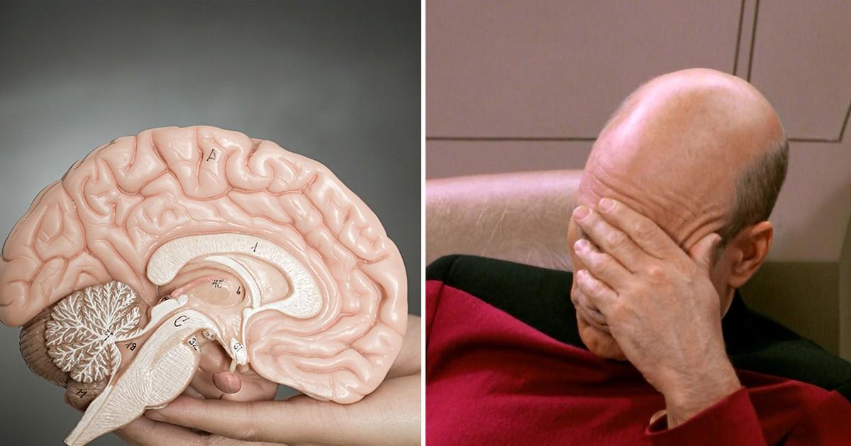 Фото Главный орган: интересные и неожиданные факты о мозге