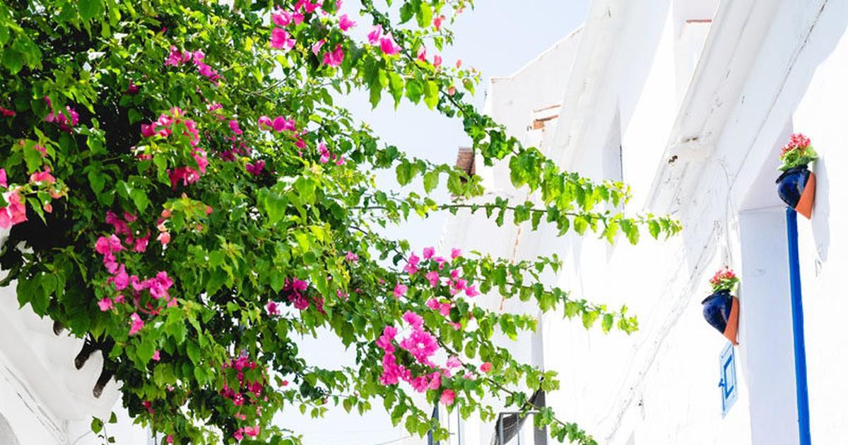 Photo of Spain Travel Guide: Malaga to Barcelona Spain