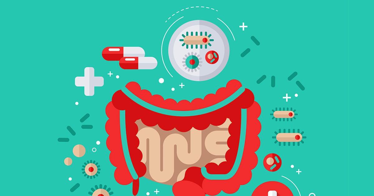 Фото Влияние пробиотиков на здоровье
