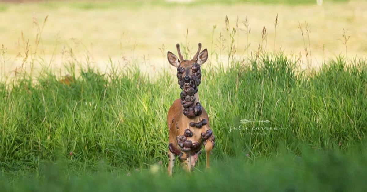 Фото Душераздирающие фото оленя не оставили пользователей равнодушными