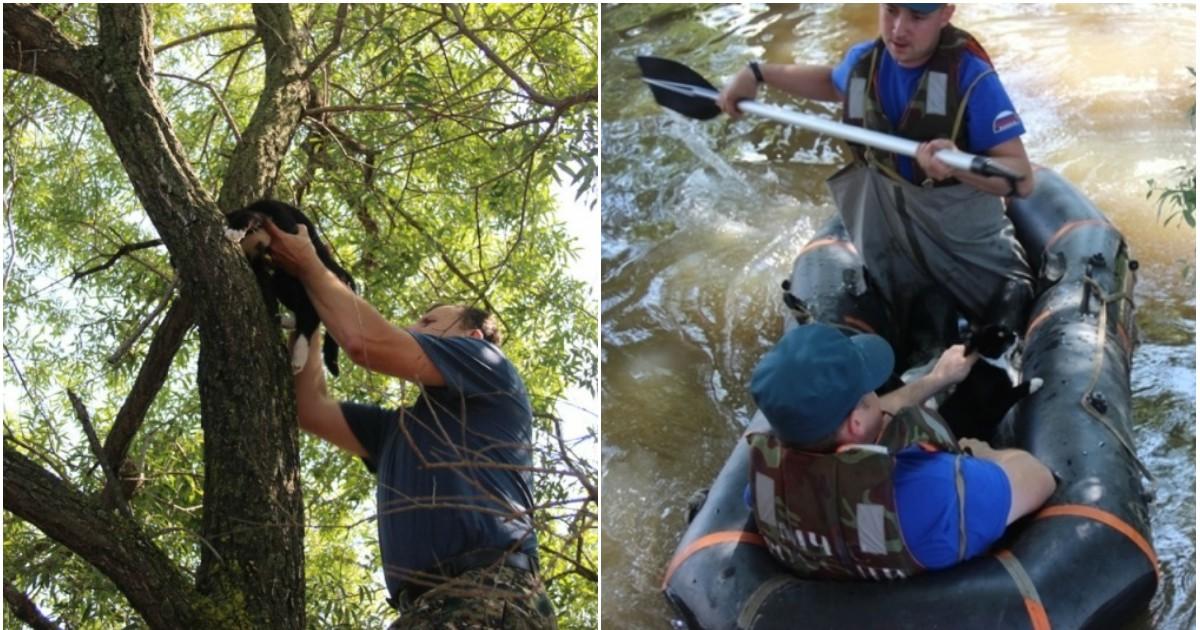 Фото Сотрудники МЧС спасли семью кошек от наводнения в Хабаровске