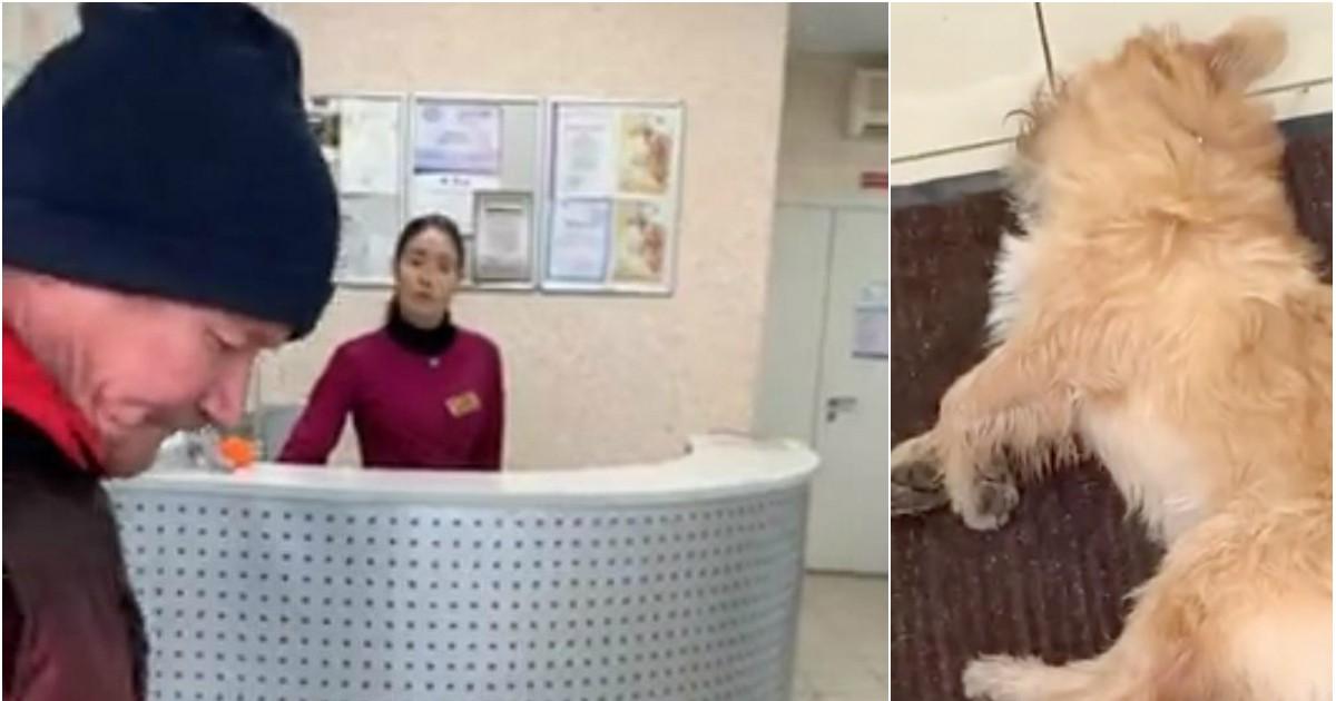 Фото Пенсионер полчаса в слезах умолял ветеринаров спасти его собаку