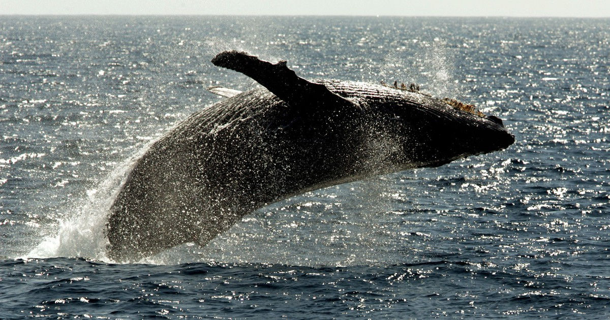 Photo of Whales Could Help Prevent a Climate Catastrophe
