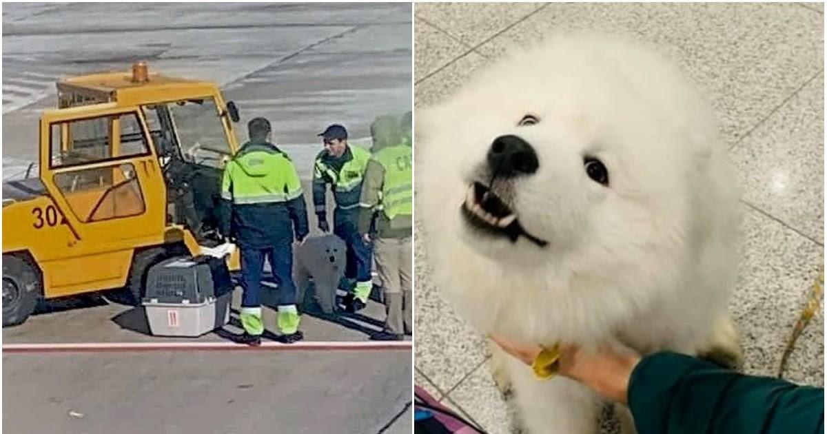 Фото В аэропорту Сочи произошел инцидент с собакой при погрузке в самолет