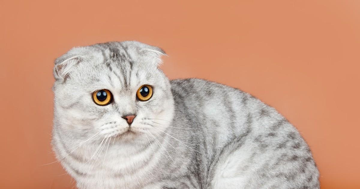Фото У кошки в России впервые диагностировали коронавирус