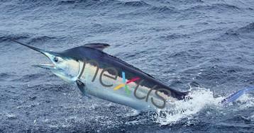 Nexus (Marlin) впервые замечен на «живой» фотографии