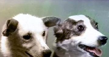 Раскрыты истинные клички собак-космонавтов Белки и Стрелки