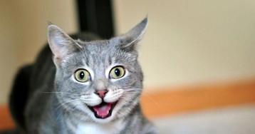 20 котиков, чрезмерно увлекшихся кошачьей мятой