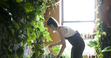 В городских джунглях: модель из Нью-Йорка выращивает в квартире более 500 растений