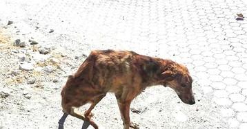 Женщина нашла собаку со сломанной спиной во время отпуска и забрала ее домой