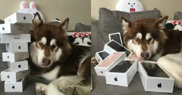 Сын богатейшего китайца купил своей собаке восемь iPhone 7: спрашивается, на кой ляд?