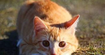 Американцы обвинили кошек в приближении экологической катастрофы