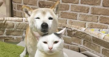 Пожилому псу, страдающему старческим слабоумием, помогает лучший друг — кот