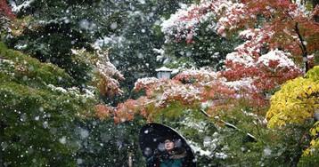 Paisagens lindas! Depois de 54 anos, Tóquio fica debaixo de neve em novembro