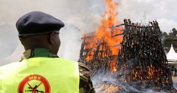Прощай, оружие! В Кении сожгли 5 тысяч нелегальных стволов