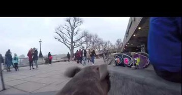 Loyal Pup Is This Skateboarder's Personal Camera Man and He Gets All the Best Footage