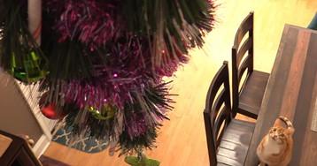 Как защитить новогоднюю елку от вредных и дерзких домашних животных