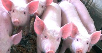 В России обнаружилась противоестественная цена на мясо
