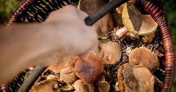 Возможность введения налога на сбор грибов и ягод обескуражила народ