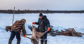 Как браконьеры на Ямале уходят от закона