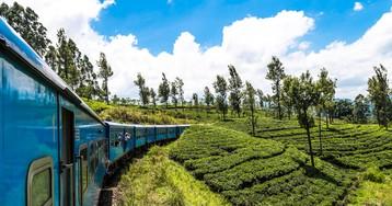 Как выращивают, собирают и готовят чай