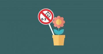 Комнатные растения, которые нельзя держать в доме с маленькими детьми