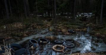 Кто загадил русский лес?