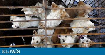 Taiwan proíbe o consumo de carne de cachorro e de gato