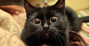 Reis da frieza? Se liga nos gatos mais fofos e dramáticos do mundo