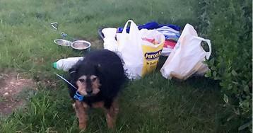 «Простите, она мне не нужна»: британцу доверили собаку, а он бросил ее в поле