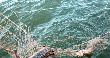 Браконьерская рыбалка в Астрахани