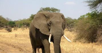 В детстве я очень хотела слона, но мама придумала, как меня отговорить…