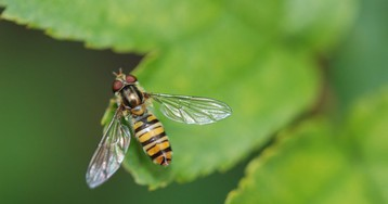 Укус пчелы — не так уж и страшно, но этот папаша считал иначе…