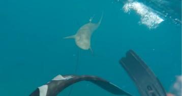 Pescador grava momento em que é atacado por tubarão