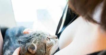 Котики и груди: умиротворяющий альбом от японского фотографа