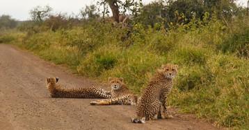 Великолепный парк Крюгер, который даст фору любому зоопарку