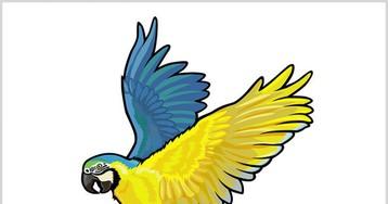 Забавный анекдот про попугая, сумевшего справиться сграбителем