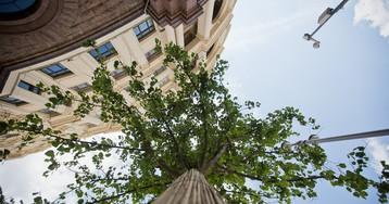 Москве нужно больше деревьев!